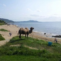It's so hot, there's a camel on the beach in Donegal