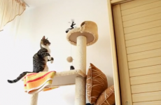 The greatest montage of cats getting frights... ever