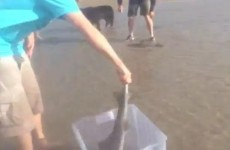 VIDEO: Family rescues 30 sharks from death on beach