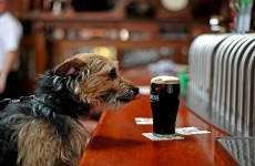 Scientists prove that Guinness tasted in Ireland really is the best