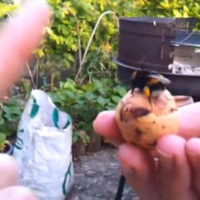 Drunk man gets high-five from bumble bee