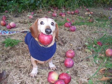 Look! I got you an apple! - Imgur