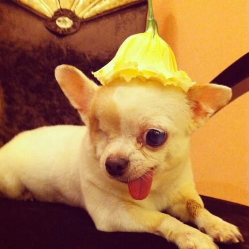 My flower hat
