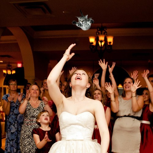 Brides Throwing Cats: Photo