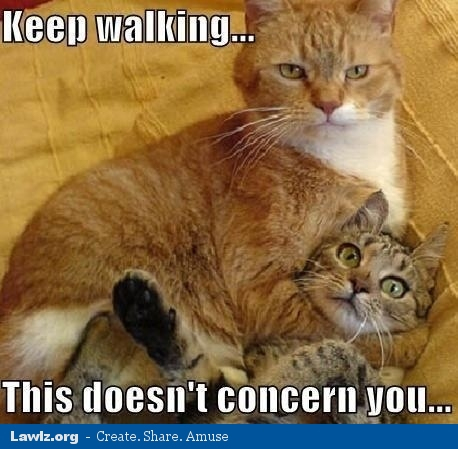 cat-meme-keep-walking-this-doesnt-concern-you