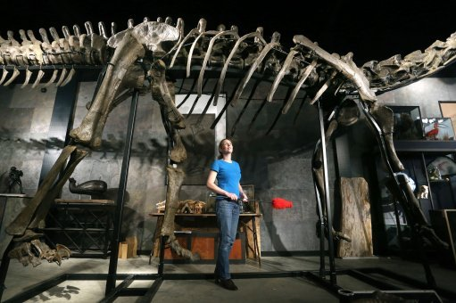 Dinosaur skeleton set for auction