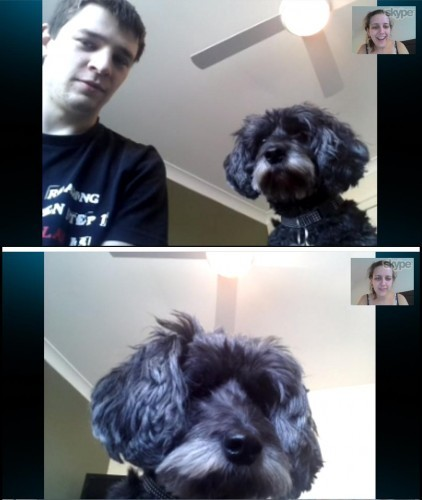 Every time I Skype my husband, my dog takes over the computer - Imgur
