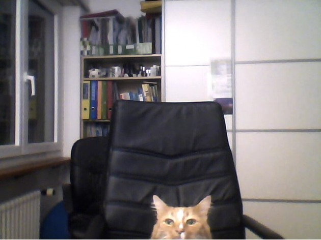 my girlfriend went to get a drink, and her cat wanted to Skype me too - Imgur