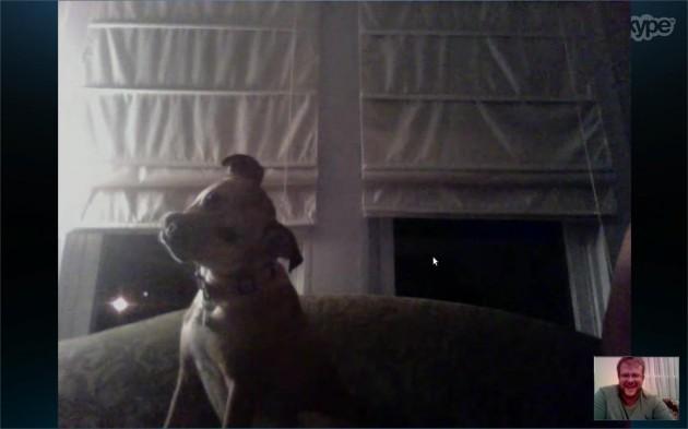 My dog's first Skype date. - Imgur