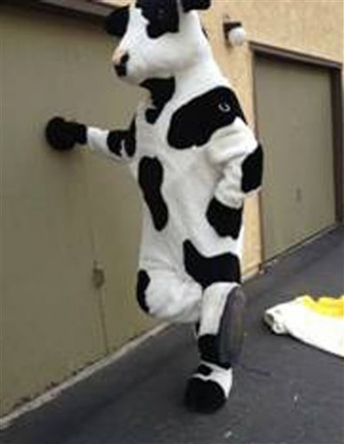 Cow suit thief arrested in Craiglist sting · The Daily Edge