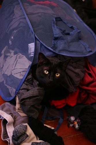 Laundry cats