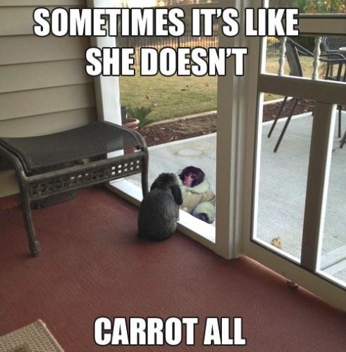 Introspective rabbit meets Ikea monkey - Imgur