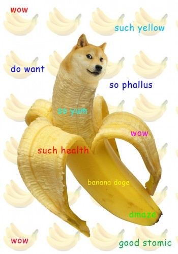 Introducing Doge The Internet Meme Which Has Everybody Talking Like