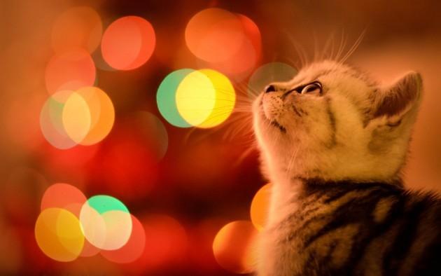 Waiting for Christmas - Imgur