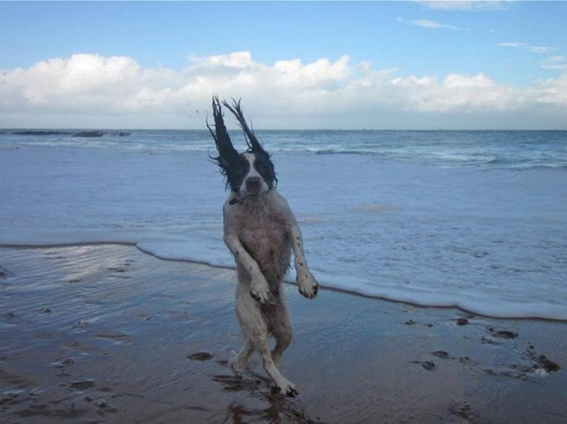 Just a dog going for a walk on the beach... - Imgur