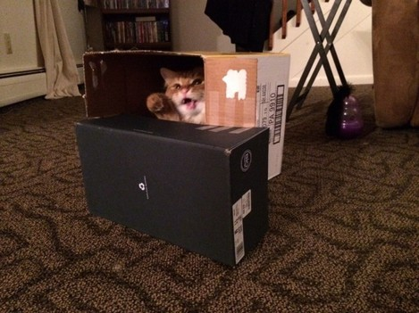 Built my cat a fort. He was thrilled. - Imgur