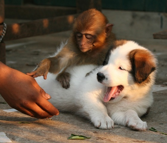 sir-no-touching-dog-please-monkey