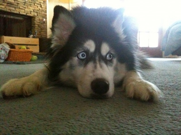 She likes to play scared dog - Imgur