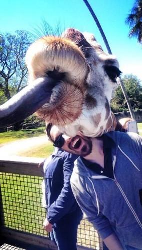 A giraffe photobombed me today - Imgur