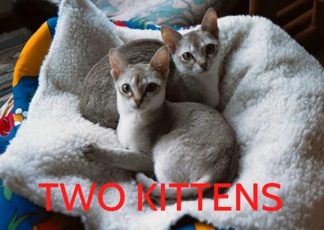 twokittens