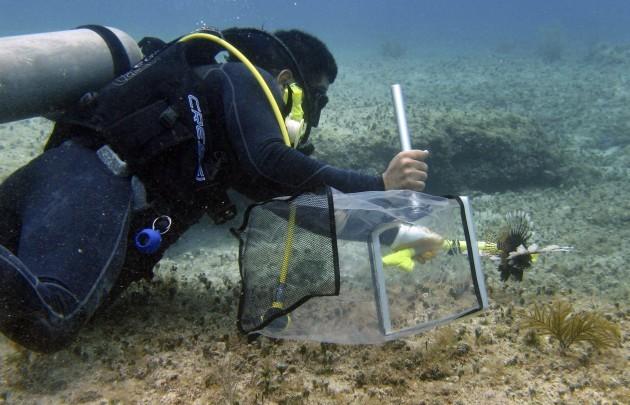 Mexico Lionfish Invasion