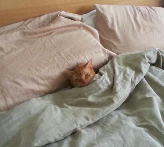 He tucked himself in. - Imgur