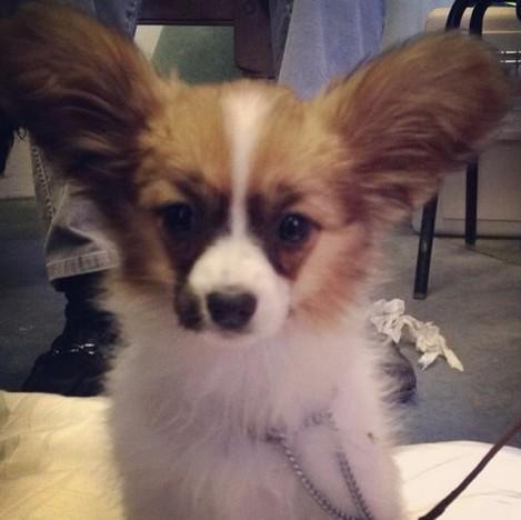 puppydog1