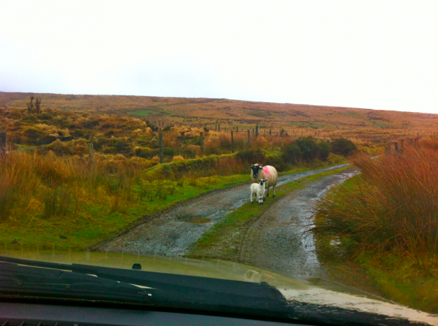 Came across some traffic whilst going climbing in Ireland - Imgur