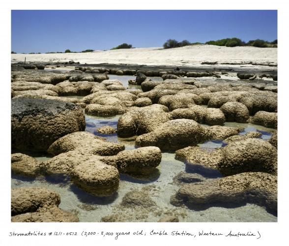 03_Sussman_WA_Stromatolites_1211_0512
