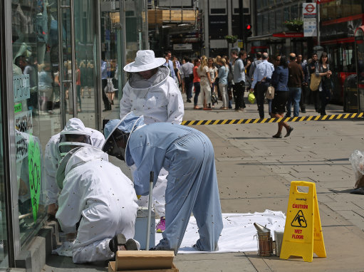 Bees in Victoria Street