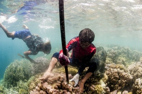 bajau-make-a-living-by-selling-the-grouper-and-napoleon-wrasse-fish-to-hong-kong-fishing-companies