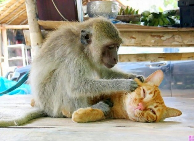 Cat and Monkey - Imgur