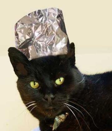 cat-with-tin-foil-hat