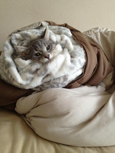 My girlfriend likes to roll him up into a kitten burrito - Imgur