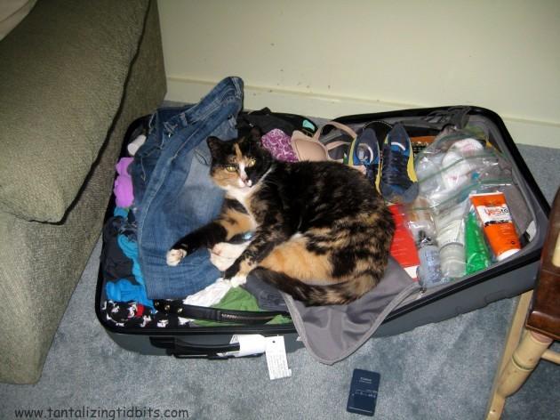 neta wants to come home to SF!