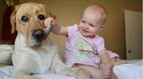 kids need pets. - Imgur