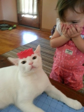My daughter was pretty excited to make the cat a princess. - Imgur