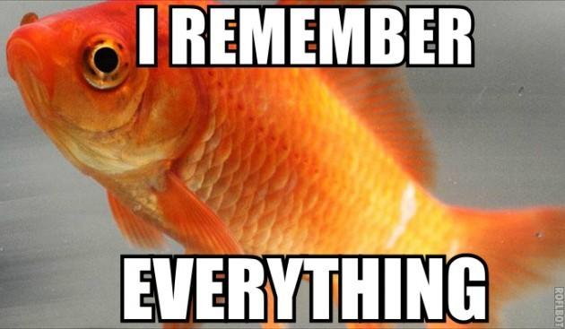 Common_goldfish