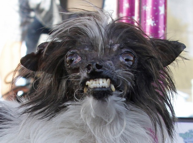 Meet Peanut Officially The Ugliest Dog In The World