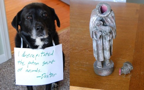 dogs-who-are-shamelessly-proud-of-what-they-just-did-6