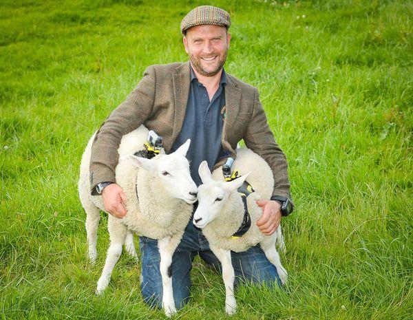 sheepcamera3