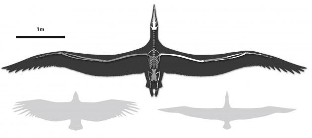 Huge Wingspan