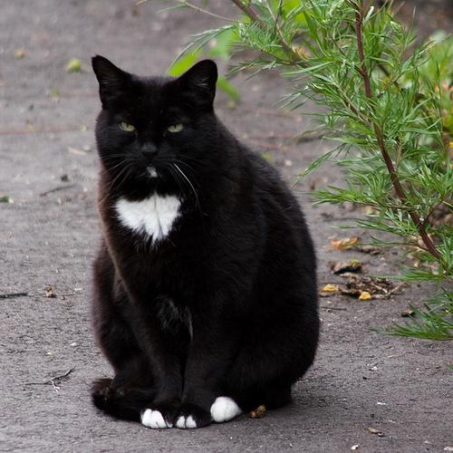Grumpy black
