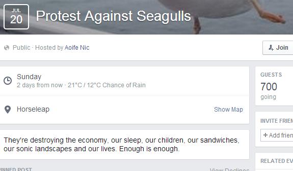 seagullsfb