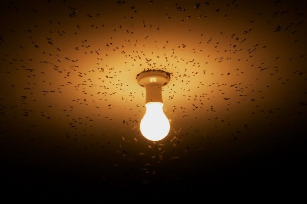 flies_attracted_to_light
