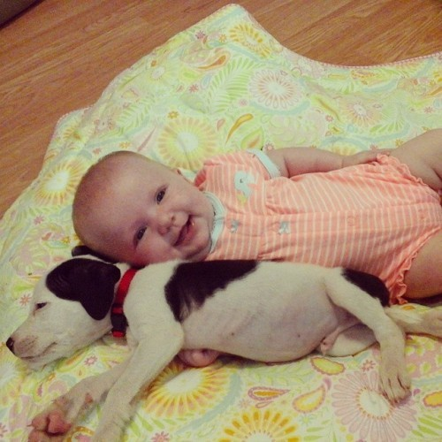 Nap time is over... #myheart #chunkaMONK #littlemisssunshine #eisleigh #babygirl #smiley #pitbullsofinstagram #loveabull #educationnoteuthanization #pitbulllove #mypitbullisfamily #pitbulladvocate #puppylove
