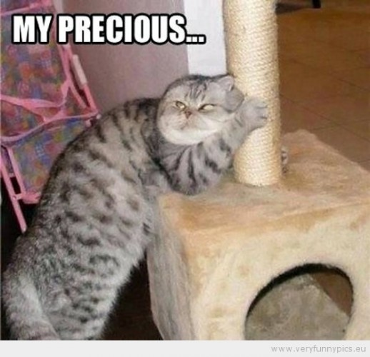 funny-picture-cat-my-precious-555x535