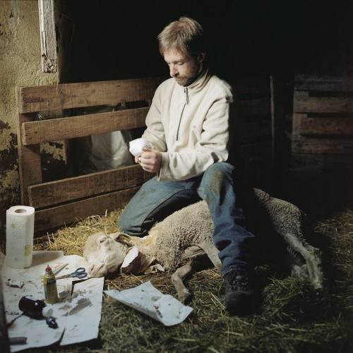 this-man-raises-goats-and-sheep-with-his-wife-in-the-province-of-ardche-in-southern-central-france-here-he-treats-a-sheep-that-got-beaten-by-his-dog