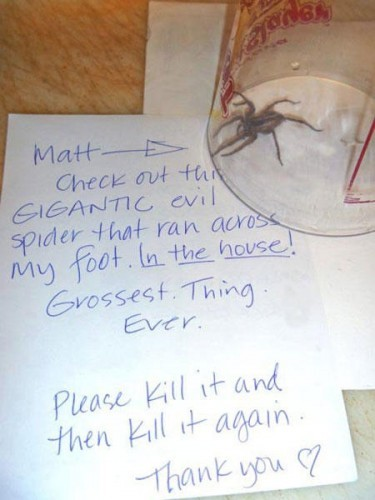 funny-rooomate-note-spider
