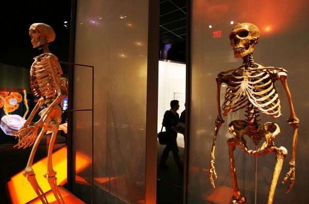 Museum Evolution
